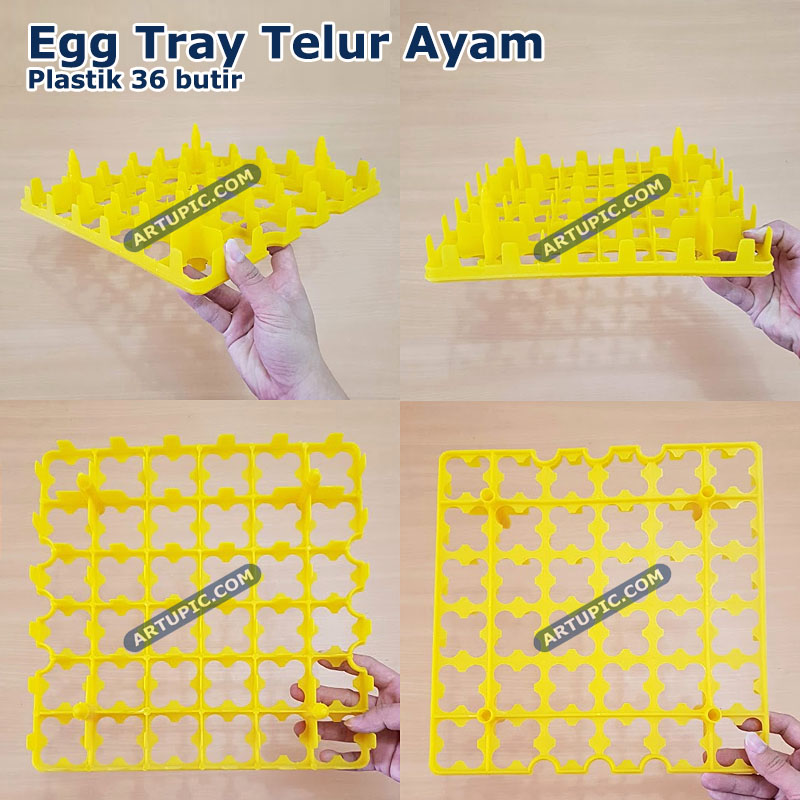 Egg tray ayam